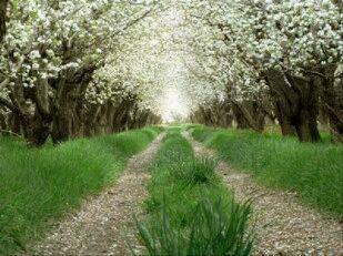 باغ گلابی-شیراز