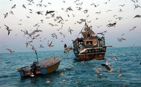 خلیج فارس1