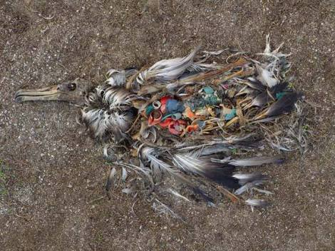 مرگ در اثر زباله خوری