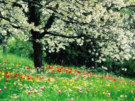iran spring