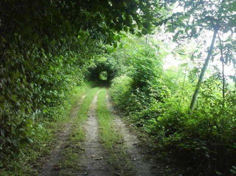 تونل سبز-خشکبیجار-گیلان