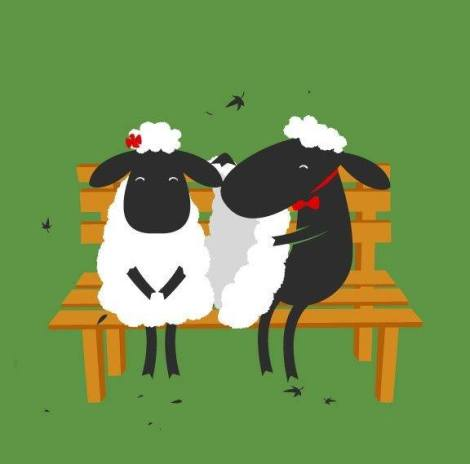 گوسفندا5