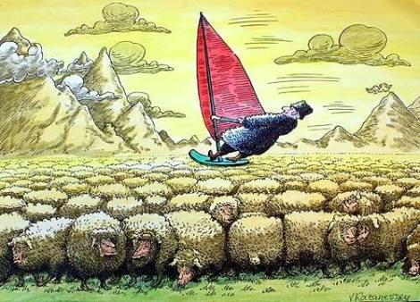 گوسفندا3