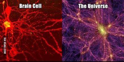 جهان ما، سلول مغز یک موجود زنده دیگر