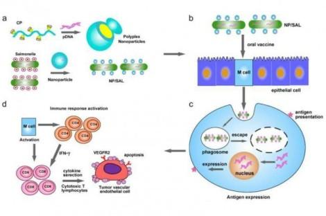 3-immunotherap