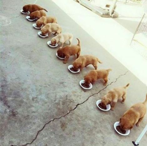 Dogs have thier food