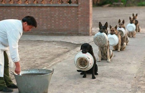 Dogs in line for food